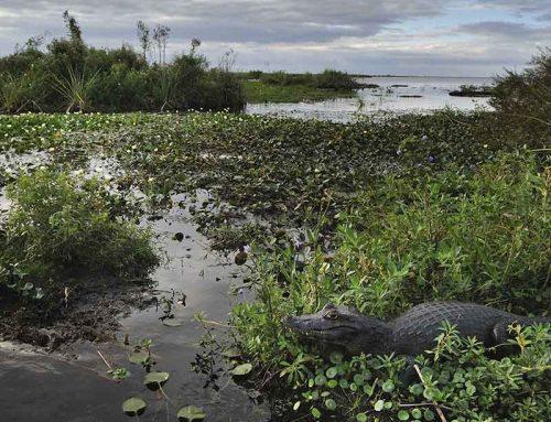 Parques nacionales en Argentina: naturaleza por todas partes